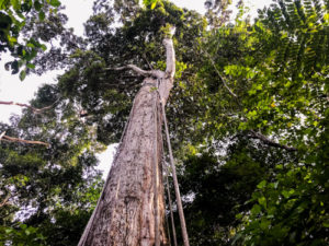 2020_01_Amazonia_Apororoka1-51