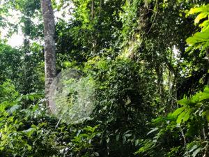 2020_01_Amazonia_Apororoka1-52